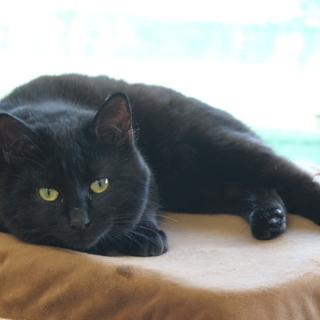 人間大好き猫も好き~性格温厚な推定1歳半の男の子  鉄男くん