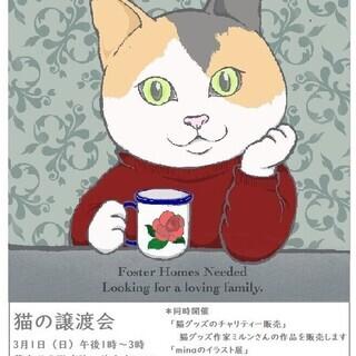 3月1日(日)猫の譲渡会・名古屋市名東区