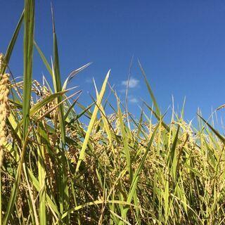 玄米 令和1年産 無肥料無農薬ひのひかり