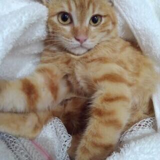 里子に出ました、気長に見てもらってます!シャー!フー!の子猫😂🙇