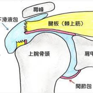 〜腱板損傷について〜