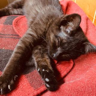 黒猫ちゃんの里親さま募集✩.*˚