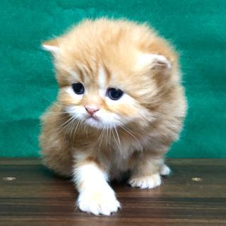 2月の新着仔猫情報②