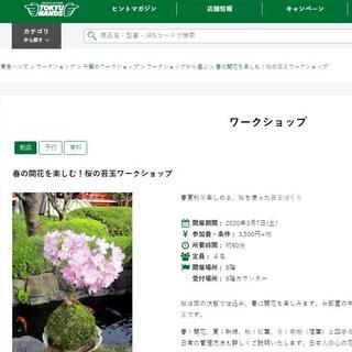 3月7日開催! 東急ハンズ柏店で桜の苔玉ワークショップ。