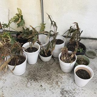 植木鉢各種 園芸用土 その他