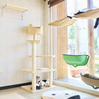 譲渡型保護猫保護猫カフェとしてオープンしました!!