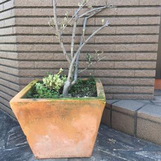 特大‼️テラコッタ 植木鉢