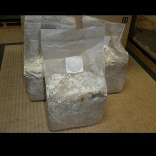 カワラ菌糸ブロック 1個