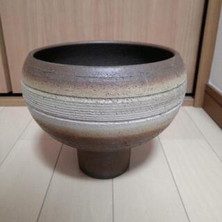 壺 / 鉢植