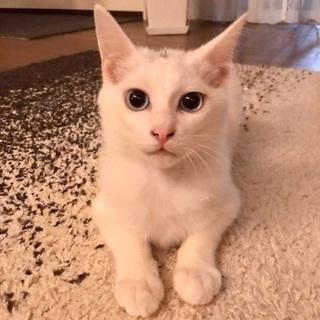兄弟猫 2019.9生まれ