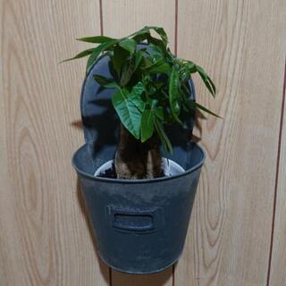 観葉植物(壁掛け鉢セット)