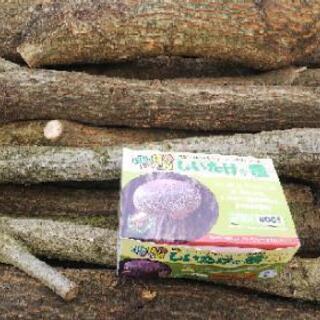 椎茸菌打ちコナラ原木