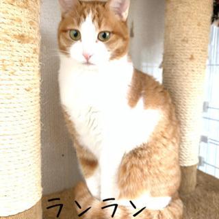 美猫ちゃんはお好きですか?