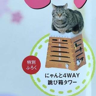 【ねこのきもち】付録  ダンボール跳び箱タワー 4way