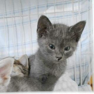 生後1ヶ月の可愛い子猫2匹