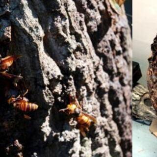 (2) スズメバチ、蜂の巣駆除、害虫駆除、害鳥駆除ならお任せ下さ...