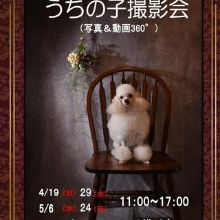 4/29(水)うちの子(写真&動画)撮影会ペットエコトレッサ横浜...