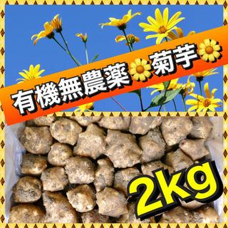 【大阪いずみ産】産直新鮮 菊芋(生食& 種芋OK❣️)
