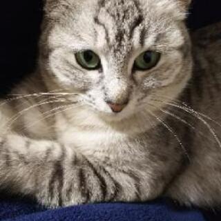 保護猫ちゃん♀避妊手術済