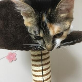 可愛い三毛猫ちゃんです🐈