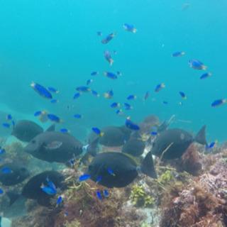 🐟魚突き、シュノーケリング⭐︎海の仲間 募集