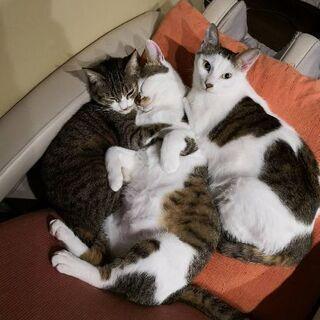 2匹とも、とてもおとなしい親子猫です