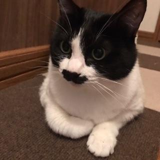 急募 猫の里親募集