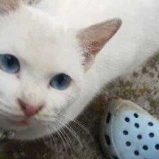 青い目をした元気な男の子です(里親様決定しました)
