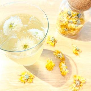 食用菊 (ハーブティー) 製菓用花