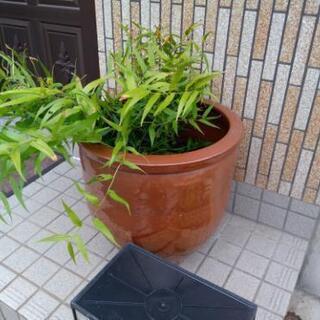 水瓶 メダカ鉢 壺 レトロ アンティーク