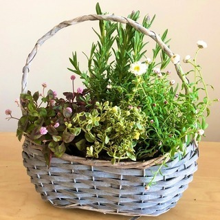 【リマインド&お値下げ】 お花が自由に選べる!春の寄せ植えワーク...