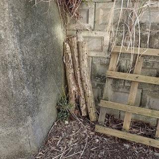 使用済みの【しいたけ栽培原木】ください 廃ホダ木 - 横須賀市