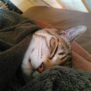 <3月18日>わんちゃん、猫ちゃんの心と身体と魂のお話会は「春の養生法」! - 教室・スクール