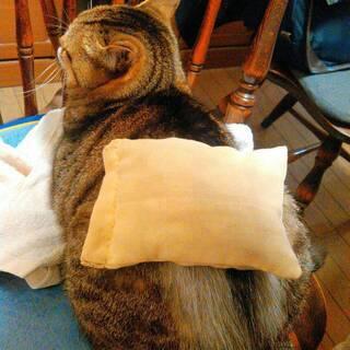 <3月18日>わんちゃん、猫ちゃんの心と身体と魂のお話会は「春の養生法」! − 東京都