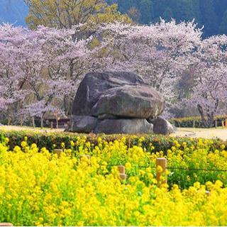 春の棚田to桜