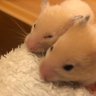 キンクマとロングとの子供 2\2生まれ