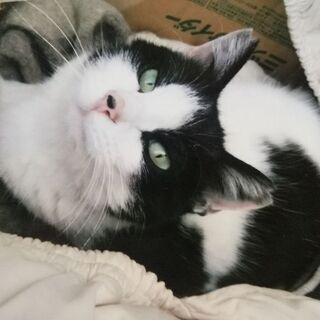 猫 ネコちゃん