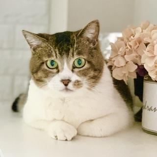 ぬいぐるみみたいな可愛いオトナ猫「ののちゃん」
