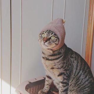 丸顔まりお君! - 猫