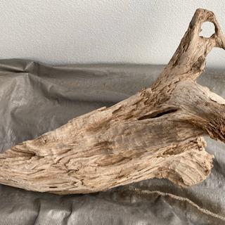 鳩っぽい流木
