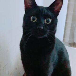 NO.66  好奇心旺盛な黒猫くん