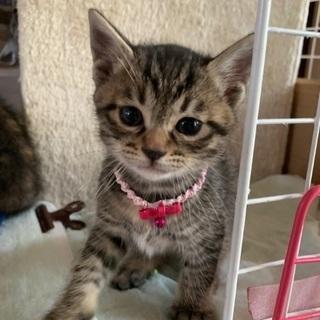 3月25日で2ヶ月目の子猫メス2匹
