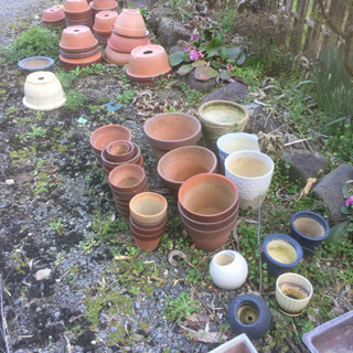 植木鉢、差し上げます。