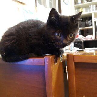 愛らしい黒猫ちゃんの男の子