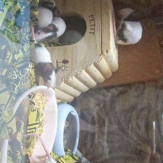 パンダマウス子供