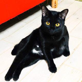 No.50 黒猫