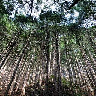 高知県内において【山林】をお探しではないですか?
