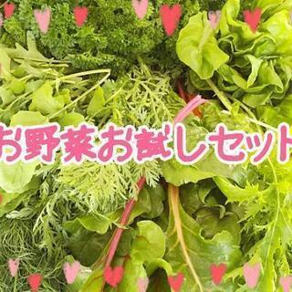 しばらく完売✨ミニお野菜お試しセット【よねベジ】