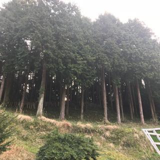 木の伐採にかかる費用を教えてください!