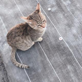 抱っこ大好きな甘えん坊な猫ちゃん